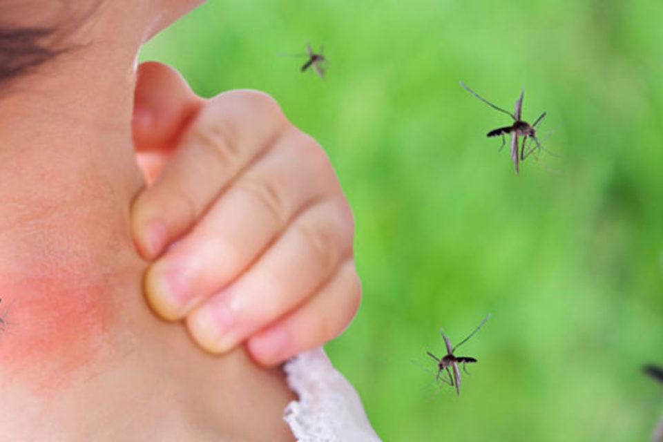 Dengue en la ciudad